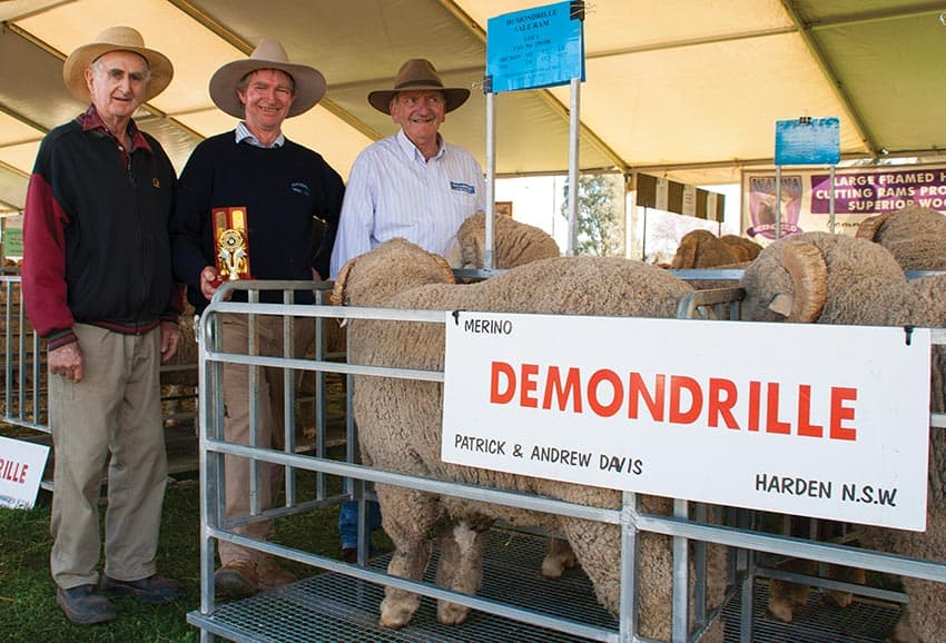 Runner up 2016 SWSSMB Pen of Three Merino Hogget Rams
