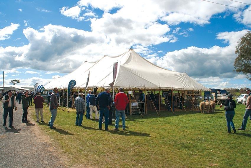 SWS Stud Merino Breeders Field Day
