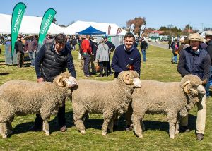 1st Runner Up - Pen of 3 - Yarrawonga Merinos 2017